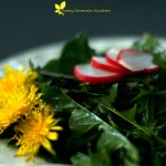 Dandelion Spring Salad With Simple Garlic Oil Dressing