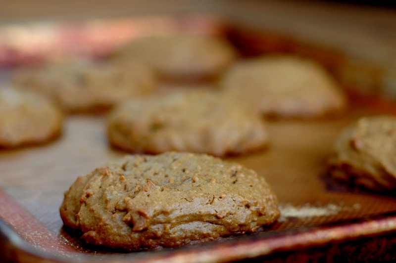 Molasses Protein Breakfast Cookie